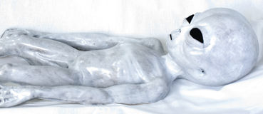 Grey straniero su fondo bianco Immagini Stock Libere da Diritti