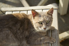 Grey street cat with light green eyes Royalty Free Stock Photo