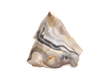 Grey striped flint chert rock isolated on a white background. Natural sample of gray striped flint chert rock, sedimentary cryptocrystalline form of the mineral royalty free stock images