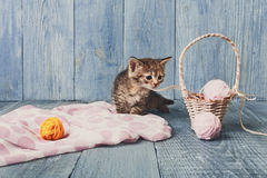 Grey striped kitten at blue wood. Grey kitten with pink wool ball and straw basket. Playful cat Stock Photos