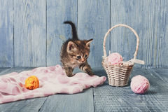 Grey striped kitten at blue wood. Grey kitten with pink wool ball and straw basket. Playful cat Royalty Free Stock Images
