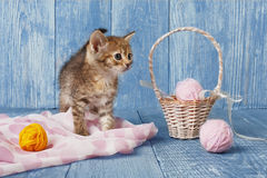 Grey striped kitten at blue wood. Grey kitten with pink wool ball and straw basket. Playful grey kitten. Sweet adorable kitten on a serenity blue wood background Stock Images