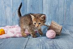 Grey striped kitten at blue wood. Grey kitten with pink wool ball and straw basket. Playful grey kitten. Sweet adorable kitten on a serenity blue wood background Royalty Free Stock Photography