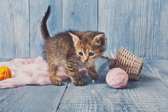 Grey striped kitten at blue wood. Grey kitten with pink wool ball and straw basket. Playful grey kitten. Sweet adorable kitten on a serenity blue wood background Royalty Free Stock Images