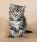 Grey striped kitten standing on yellow Royalty Free Stock Photo