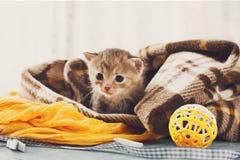 Grey striped newborn kitten in a plaid blanket Royalty Free Stock Photo
