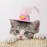 Grey the striped Scottish cat in a decorative hat with a feather Royalty Free Stock Photography
