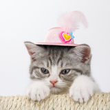 Grey the striped Scottish cat in  decorative hat with a feather Royalty Free Stock Photos