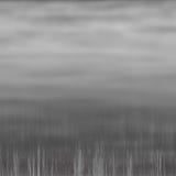 Grey Swamp Royalty Free Stock Photography