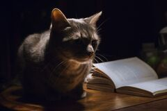 Grey Tabby Cat Laying Next to Book Stock Photo