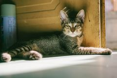Grey Tabby Cat Lying Beside Brown Wooden Door at Daytime Royalty Free Stock Image