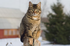 Grey tabby cat sitting on post Royalty Free Stock Photography