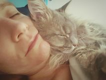 Cat snuggling woman. Grey tabby cat snuggling a sleeping woman& x27;s face Stock Photo