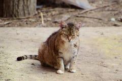 Grey tabby cat winks Royalty Free Stock Photo
