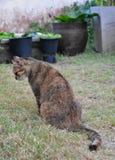 Grey Tabby Friendly Cat interesante algunas comidas en el campo de hierba imagen de archivo libre de regalías