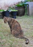 Grey Tabby Friendly Cat interessant etwas Nahrungsmittel auf der Rasenfläche lizenzfreies stockbild