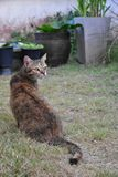Grey Tabby Friendly Cat interesting some foods on the grass field royalty free stock photos