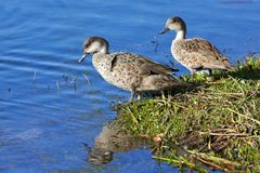 Grey Teal Stock Image