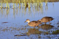 Grey Teal Stock Images