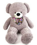 Grey toy bear isolated on white. Background Royalty Free Stock Images