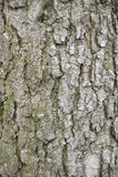 Grey Tree Bark Foto de archivo libre de regalías