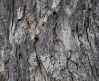 Grey Tree Bark-Abschluss oben stockfotografie