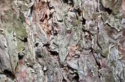 Grey tree bark close view Stock Image