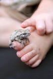 Grey Tree Frog Sitting sul piede del bambino Immagini Stock