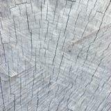 Grey Tree Stump Cut Texture resistido natural, fondo detallado grande, primer macro envejecido viejo Fotografía de archivo