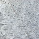 Grey Tree Stump Cut Texture resistido natural, fondo texturizado detallado grande del modelo, árbol envejecido viejo Fotografía de archivo