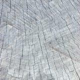 Grey Tree Stump Cut Texture resistido natural, fondo texturizado detallado grande del modelo Fotografía de archivo