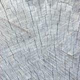 Grey Tree Stump Cut Texture resistido natural, grande fundo detalhado, teste padrão Textured resistido envelhecido velho fotos de stock royalty free
