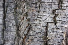 Grey trunk close up with blurry background royalty free stock images