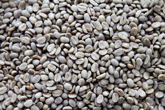 Grey unroasted coffee beans Royalty Free Stock Images