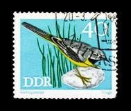 Grey Wagtail (Motacilla cinerea), serie protegido de los pájaros cantantes, circa 1973 fotos de archivo
