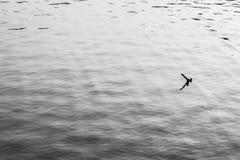 Grey Wave Foto de archivo libre de regalías