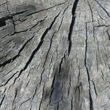 Grey weathered tree stump. Grey weathered tree cracks Stock Images