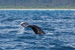 Grey Whale-Endstück lizenzfreie stockfotos