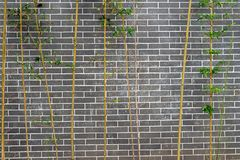 Grey white brick wall and  green bamboo as a texture pattern background stock images