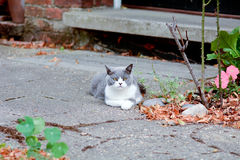 Grey and white cat in garden Royalty Free Stock Photo