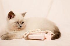 Grey and white kitten Royalty Free Stock Photos