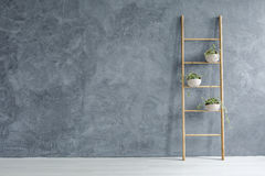Grey and white room. With wooden ladder with flowerpots Royalty Free Stock Images
