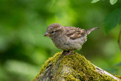 Grey and White Small Bird on Grey Moss Covered Rock Tilt Screen Photography Royalty Free Stock Photo