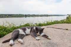 Grey and White stray cat sleeping, lying on the roof of a house over the Danube in Zemun district, in Belgrade, Serbia. Picture of a stray cat, half gray half stock image