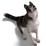 Grey Wolf. 3D rendering with clipping path and shadow over white Stock Image