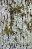 Grey wood texture on the old crust Royalty Free Stock Images