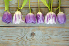 Grey wooden empty copy space background with colorful tulips Royalty Free Stock Images
