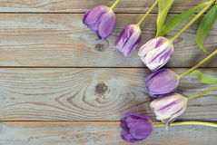 Grey wooden empty copy space background with colorful tulips Royalty Free Stock Photos