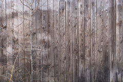 Grey wooden house wall with tree without leaves Royalty Free Stock Photography