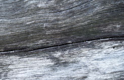 Grey wooden texture macro photo. White and grey wood background. Royalty Free Stock Image